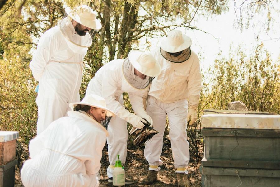 Ruta de apicultores en Madrid