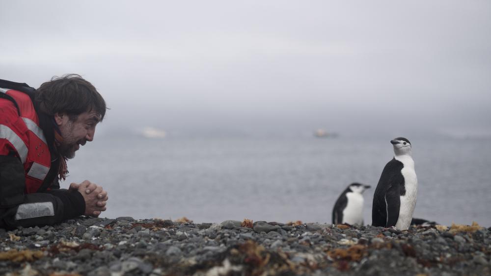 Javier Bardem saludando a un pingüino barbijo a su llegada a la Isla King Georg, en el Artico, mientras espera reunirse con Greenpeace en su mítico barco Arctic Sunrise. EPA/CHRISTIAN ASLUND