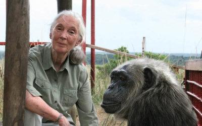 Jane Goodall, uno de esos homo sapiens extraordinarios